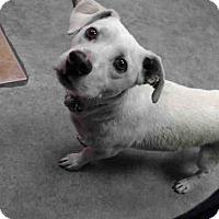 Adopt A Pet :: Max - Lomita, CA