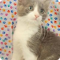Adopt A Pet :: William - Modesto, CA