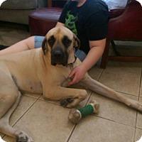 Adopt A Pet :: Charlee - Goodyear, AZ