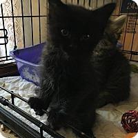 Adopt A Pet :: Dolan - Whitehall, PA