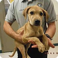 Adopt A Pet :: A569998 - Oroville, CA