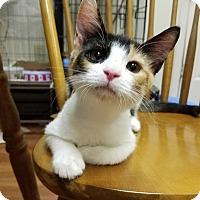 Adopt A Pet :: Kaneko - Trevose, PA