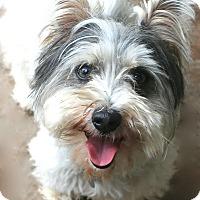 Adopt A Pet :: Billy - Woonsocket, RI