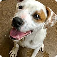 Adopt A Pet :: Tank - Albion, NY