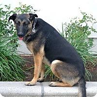Adopt A Pet :: Patrick - San Diego, CA