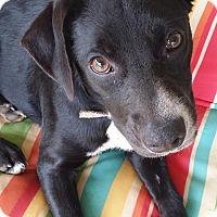 Adopt A Pet :: Maci - Fort Atkinson, WI
