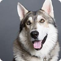 Adopt A Pet :: Kieran - Columbia, SC