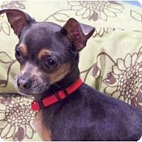 Adopt A Pet :: Huey - Mooy, AL