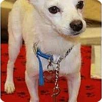 Adopt A Pet :: Tequia - Gilbert, AZ