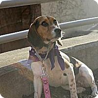 Adopt A Pet :: Tilly - Grand Rapids, MI