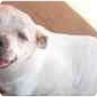 Adopt A Pet :: Poochie - Blanchard, OK