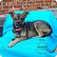 Adopt A Pet :: Becky - Shawnee Mission, KS