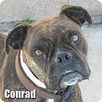 Adopt A Pet :: Conrad - Encino, CA