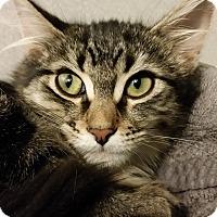 Adopt A Pet :: Portia - Grayslake, IL