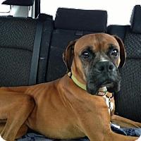 Adopt A Pet :: Lealand - Brentwood, TN