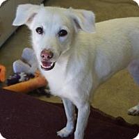 Adopt A Pet :: 'CHERRY' - Agoura Hills, CA