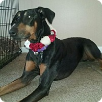 Adopt A Pet :: Dixie - New Richmond, OH