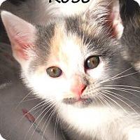 Adopt A Pet :: Rose Bouquet - Nashville, TN