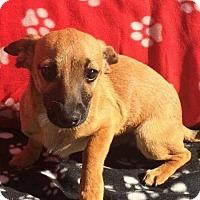 Adopt A Pet :: Eric - Alta Loma, CA