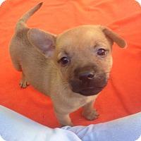 Adopt A Pet :: Sadie (ARSG) - Santa Ana, CA
