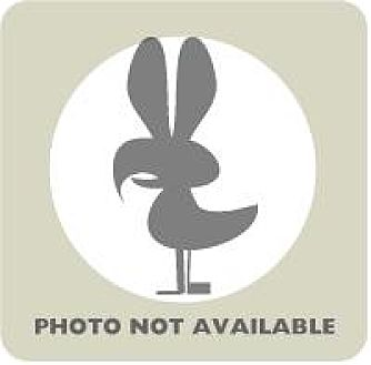 Duck for adoption in Fairport, New York - Rouen male 1