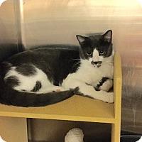 Adopt A Pet :: Kramer - Colmar, PA
