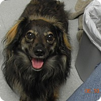 Adopt A Pet :: ABBEY - Sandusky, OH