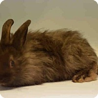 Adopt A Pet :: MIDNIGHT - Brooklyn, NY