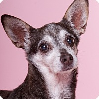 Adopt A Pet :: Eloise - Chicago, IL