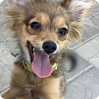 Adopt A Pet :: Spike - Phoenix, AZ