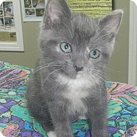 Adopt A Pet :: Kaisey - Creston, BC