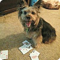 Adopt A Pet :: Vegas - Durham, NC