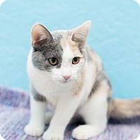 Adopt A Pet :: Carmel (Petco- Indian Bend) - Scottsdale, AZ