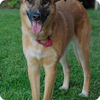 Adopt A Pet :: Chloe - Boulder, CO