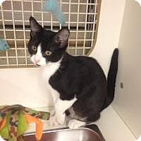 Adopt A Pet :: Monkey - Bridgeton, MO