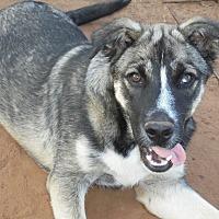 Adopt A Pet :: Critter - Anton, TX