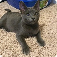 Adopt A Pet :: Remy - Manhattan, KS