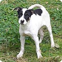 Adopt A Pet :: Paul - Minneapolis, MN