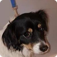 Adopt A Pet :: BUD - Rancho Cucamonga, CA