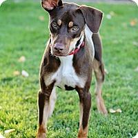 Adopt A Pet :: Gwilyn - Salt Lake City, UT