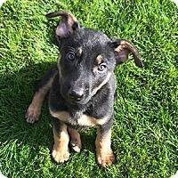 Adopt A Pet :: Marcus - Phoenix, AZ