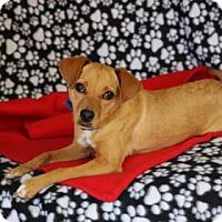 Adopt A Pet :: Nixie - Yucaipa, CA