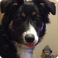 Adopt A Pet :: Gizmo - Washington, IL