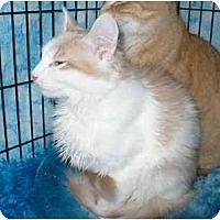 Adopt A Pet :: Beeker - Colmar, PA