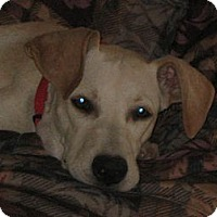 Adopt A Pet :: Kenzie - Golden Valley, AZ