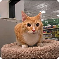 Adopt A Pet :: Titus - Warminster, PA
