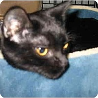 Adopt A Pet :: Calze - Mission, BC