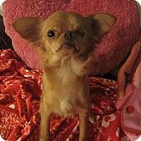 Adopt A Pet :: Brookie - San Diego, CA