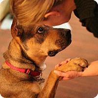 Shepherd (Unknown Type)/Rottweiler Mix Dog for adoption in Rockaway, New Jersey - Roxy