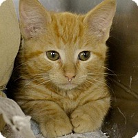 Adopt A Pet :: Lorenzo - Hollywood, MD